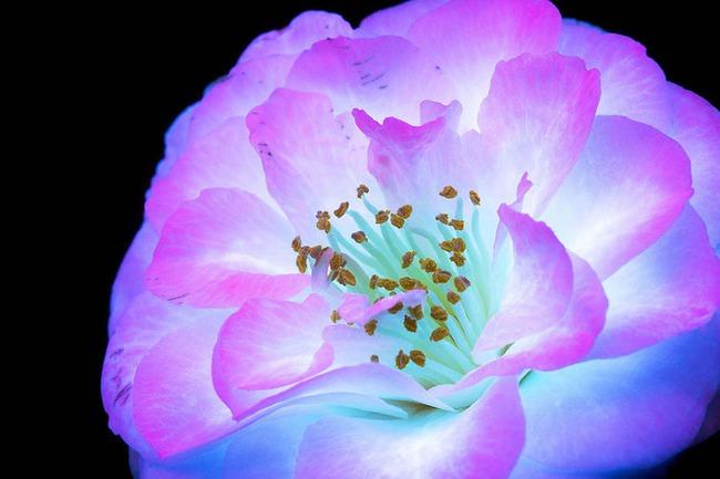Khi những bông hoa phát sáng đẹp đến ngỡ ngàng - Ảnh 10.