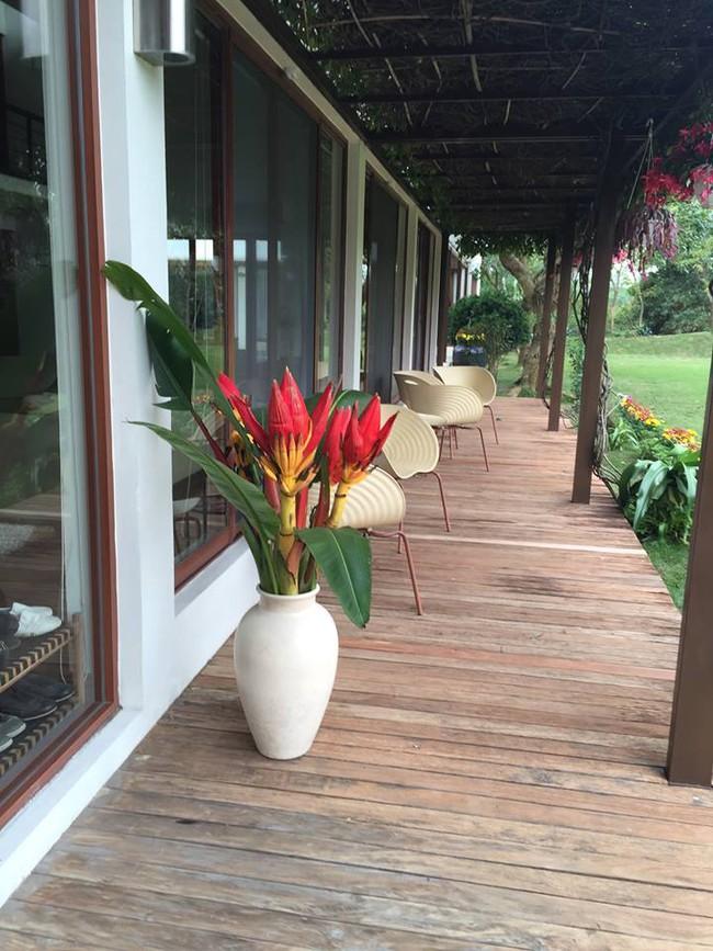 Cuộc sống bình yên của gia đình ca sĩ Mỹ Linh trong nhà vườn ngập tràn sắc hoa ở ngoại ô - Ảnh 8.