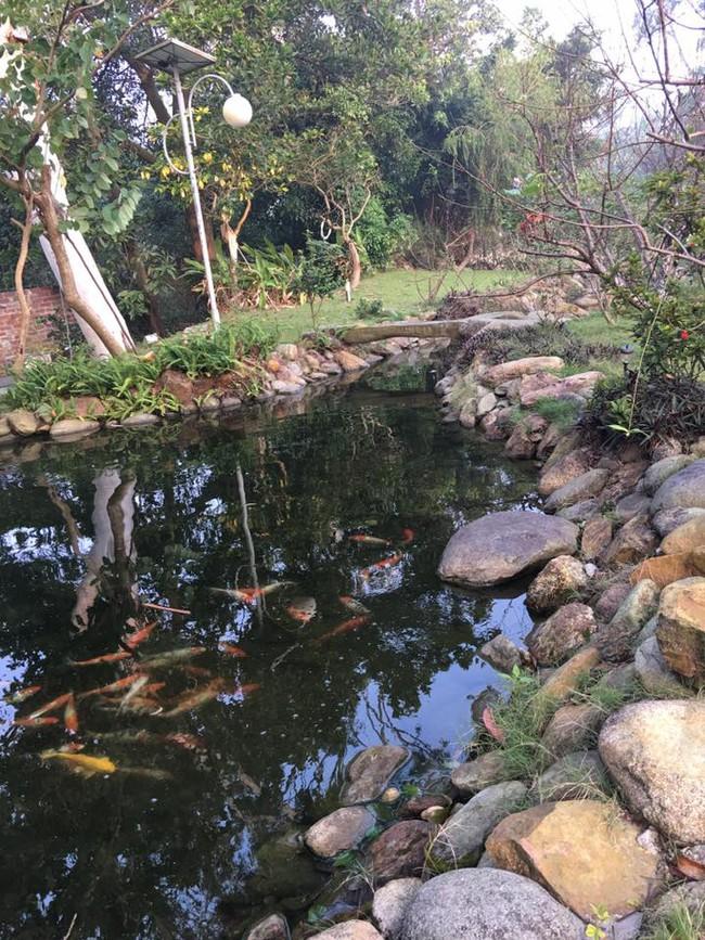 Cuộc sống bình yên của gia đình ca sĩ Mỹ Linh trong nhà vườn ngập tràn sắc hoa ở ngoại ô - Ảnh 9.