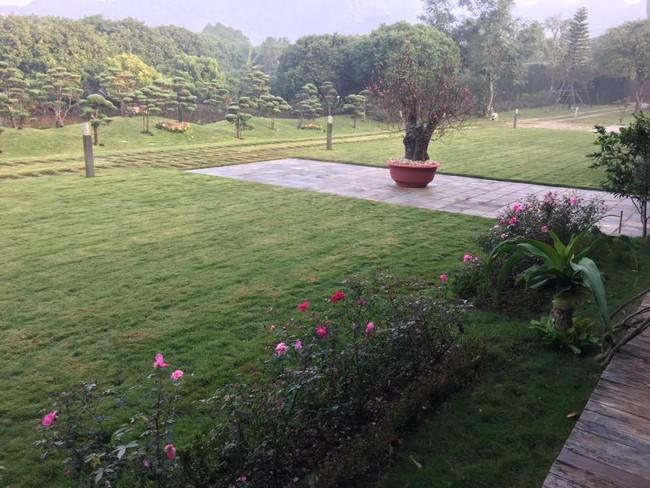Cuộc sống bình yên của gia đình ca sĩ Mỹ Linh trong nhà vườn ngập tràn sắc hoa ở ngoại ô - Ảnh 11.