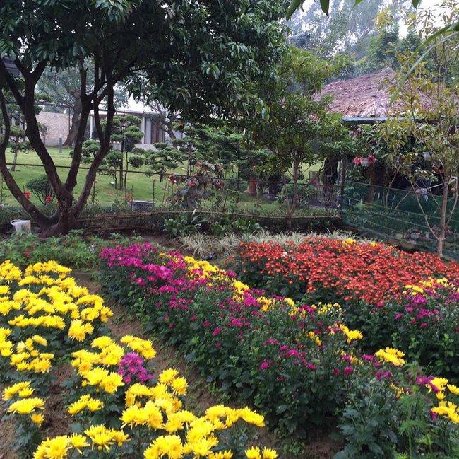 Cuộc sống bình yên của gia đình ca sĩ Mỹ Linh trong nhà vườn ngập tràn sắc hoa ở ngoại ô - Ảnh 12.
