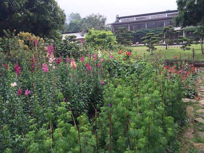 Cuộc sống bình yên của gia đình ca sĩ Mỹ Linh trong nhà vườn ngập tràn sắc hoa ở ngoại ô - Ảnh 13.