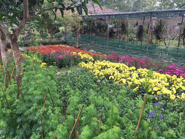 Cuộc sống bình yên của gia đình ca sĩ Mỹ Linh trong nhà vườn ngập tràn sắc hoa ở ngoại ô - Ảnh 14.