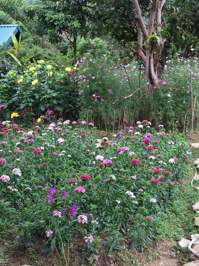 Cuộc sống bình yên của gia đình ca sĩ Mỹ Linh trong nhà vườn ngập tràn sắc hoa ở ngoại ô - Ảnh 15.