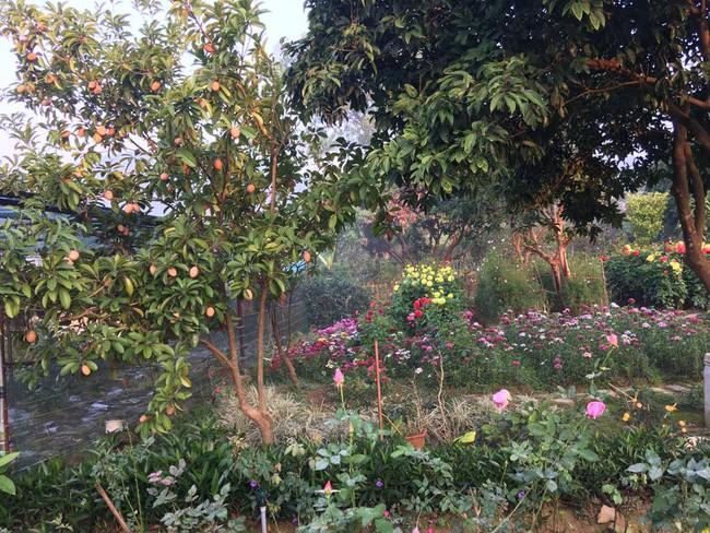 Cuộc sống bình yên của gia đình ca sĩ Mỹ Linh trong nhà vườn ngập tràn sắc hoa ở ngoại ô - Ảnh 17.