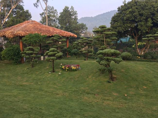 Cuộc sống bình yên của gia đình ca sĩ Mỹ Linh trong nhà vườn ngập tràn sắc hoa ở ngoại ô - Ảnh 18.