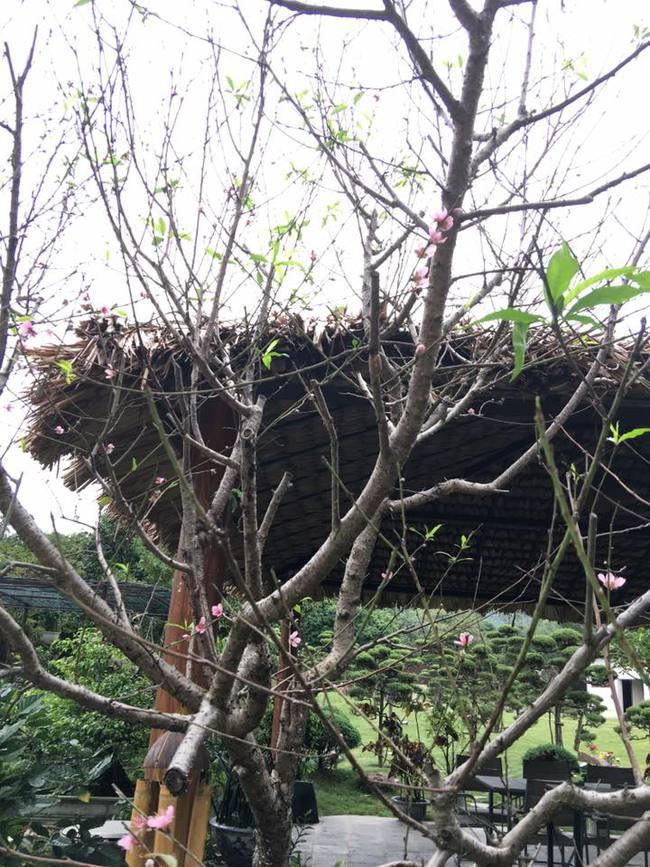 Cuộc sống bình yên của gia đình ca sĩ Mỹ Linh trong nhà vườn ngập tràn sắc hoa ở ngoại ô - Ảnh 20.