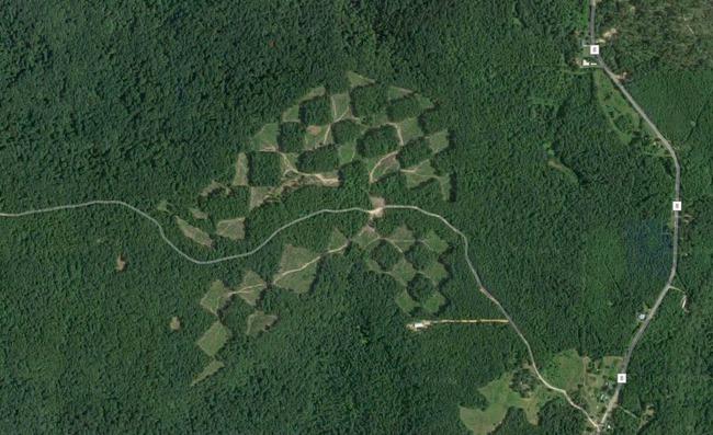 Khu rừng kỳ lạ nhìn từ trên cao trông giống hệt một bàn cờ với các ô vuông đều tăm tắp - Ảnh 2.