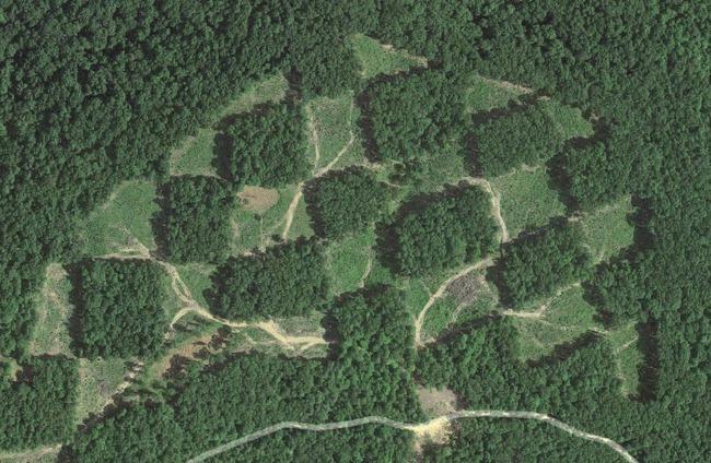 Khu rừng kỳ lạ nhìn từ trên cao trông giống hệt một bàn cờ với các ô vuông đều tăm tắp - Ảnh 3.