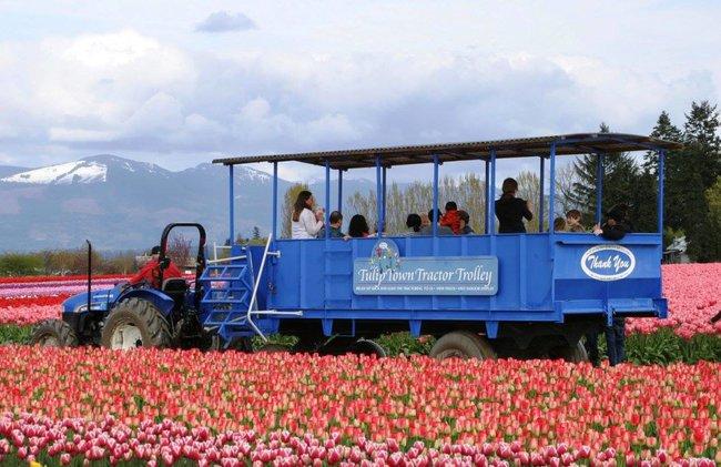 6 khu vườn hoa tulip chỉ nhìn thôi cũng khiến người ta ngất ngây bởi quá đẹp, quá rực rỡ - Ảnh 7.