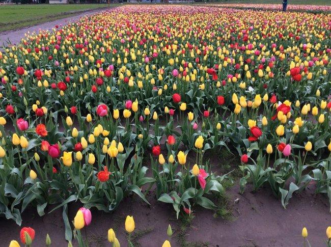 6 khu vườn hoa tulip chỉ nhìn thôi cũng khiến người ta ngất ngây bởi quá đẹp, quá rực rỡ - Ảnh 26.