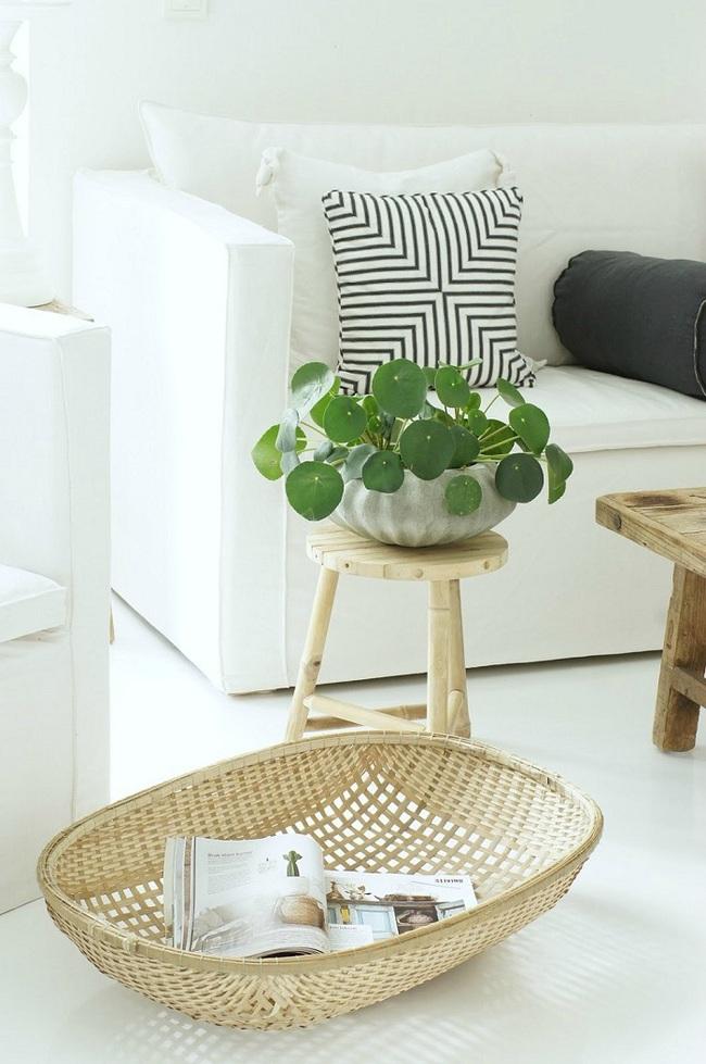 10 loài cây cảnh vô cùng phù hợp để trồng trong ngôi nhà của mình - Ảnh 1.