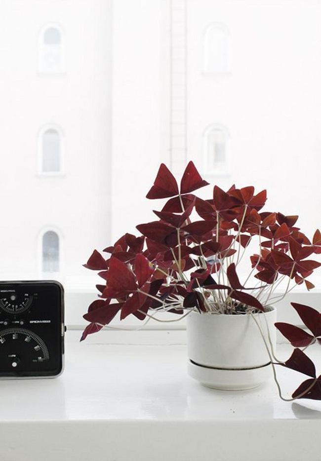 10 loài cây cảnh vô cùng phù hợp để trồng trong ngôi nhà của mình - Ảnh 3.