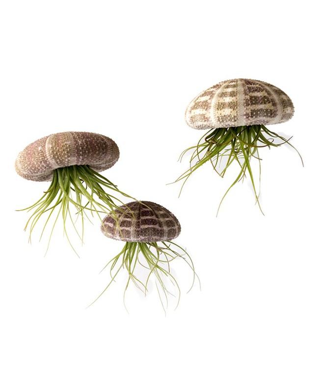 10 loài cây cảnh vô cùng phù hợp để trồng trong ngôi nhà của mình - Ảnh 5.