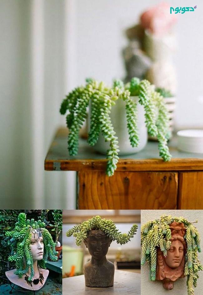 10 loài cây cảnh vô cùng phù hợp để trồng trong ngôi nhà của mình - Ảnh 6.