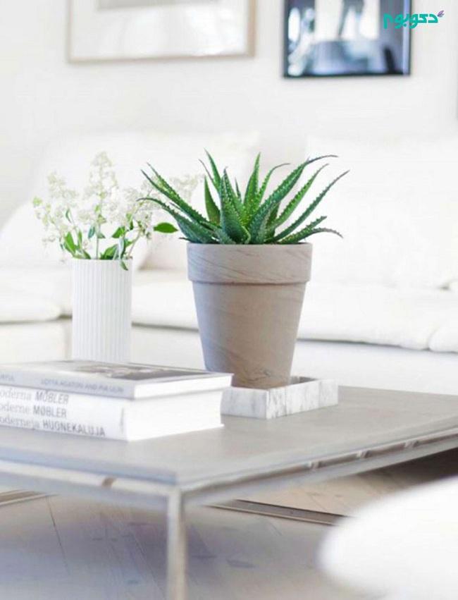 10 loài cây cảnh vô cùng phù hợp để trồng trong ngôi nhà của mình - Ảnh 9.