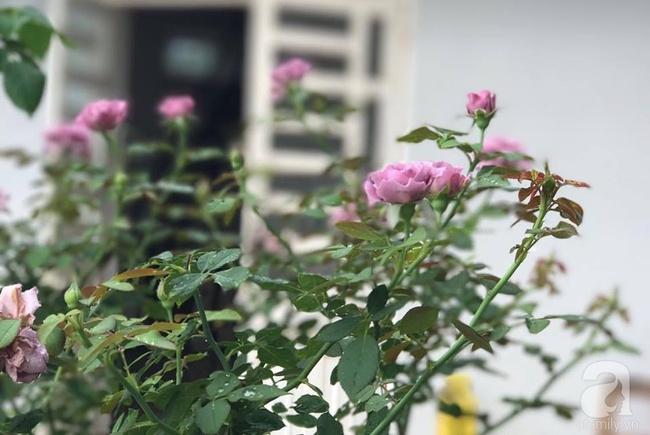 Vẻ quyến rũ của hàng trăm loài hoa hồng quý trên sân thượng 50m² của chàng trai độc thân 8x ở Vũng Tàu - Ảnh 21.