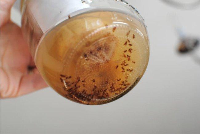 Nhà bếp sạch bóng ruồi muỗi với cách làm cực đơn giản dưới đây - Ảnh 3.