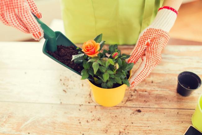 Nếu muốn trồng hoa hồng thì đây là thời điểm tốt nhất bạn không thể bỏ lỡ - Ảnh 3.