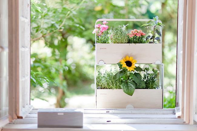 17 hệ thống trồng cây trong nhà vô cùng thông minh cho người bận rộn - Ảnh 2.