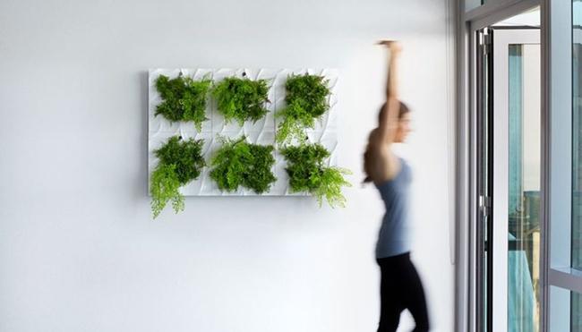 17 hệ thống trồng cây trong nhà vô cùng thông minh cho người bận rộn - Ảnh 7.