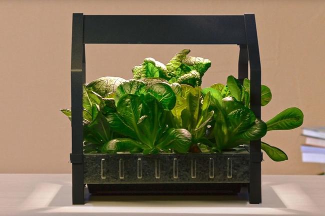 17 hệ thống trồng cây trong nhà vô cùng thông minh cho người bận rộn - Ảnh 10.