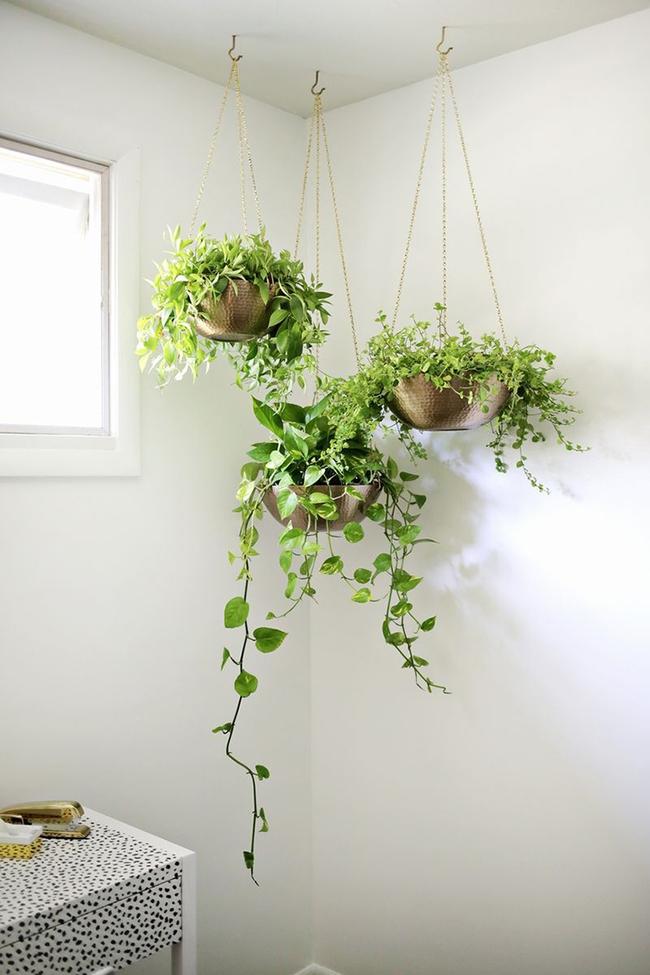 17 hệ thống trồng cây trong nhà vô cùng thông minh cho người bận rộn - Ảnh 18.