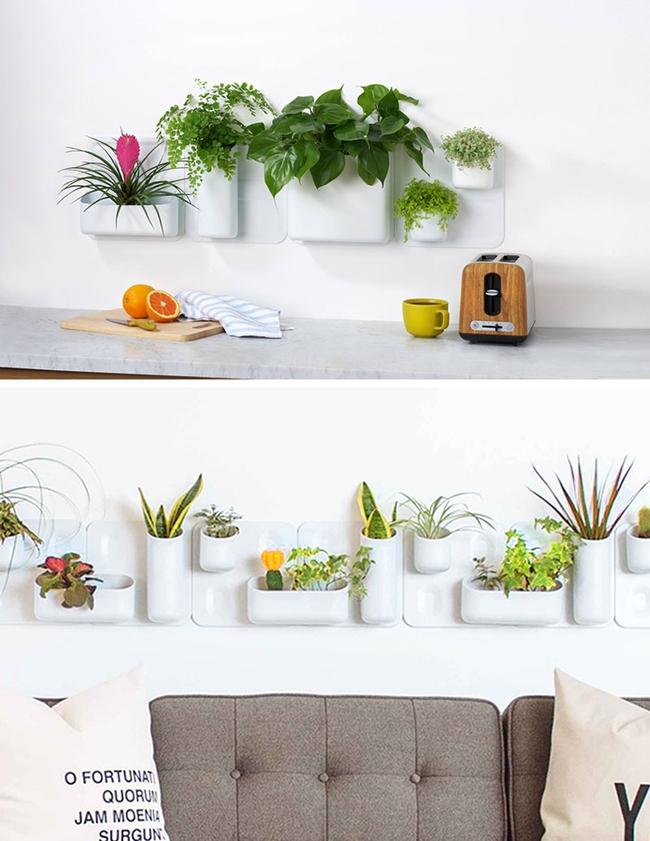 17 hệ thống trồng cây trong nhà vô cùng thông minh cho người bận rộn - Ảnh 19.