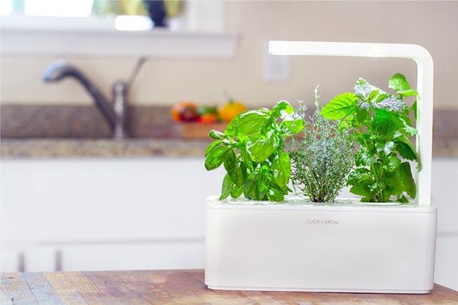 15 thiết kế chậu trồng cây gia vị thông minh và hiện đại cho những không gian nhỏ - Ảnh 5.