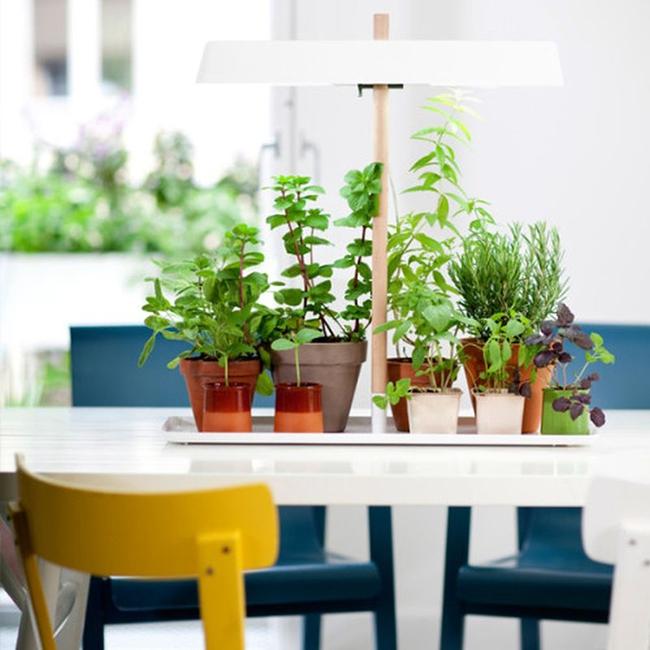 15 thiết kế chậu trồng cây gia vị thông minh và hiện đại cho những không gian nhỏ - Ảnh 11.