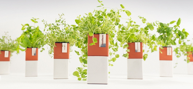 15 thiết kế chậu trồng cây gia vị thông minh và hiện đại cho những không gian nhỏ - Ảnh 13.