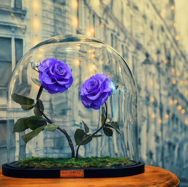 Chiêm ngưỡng những bông hồng vĩnh cửu đặt trong lồng kính y như truyện cổ tích - Ảnh 2.