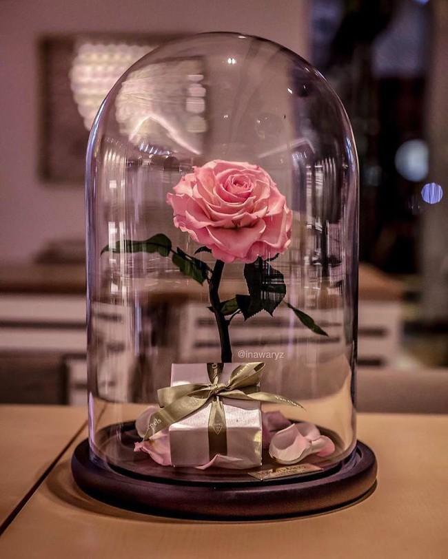 Chiêm ngưỡng những bông hồng vĩnh cửu đặt trong lồng kính y như truyện cổ tích - Ảnh 7.