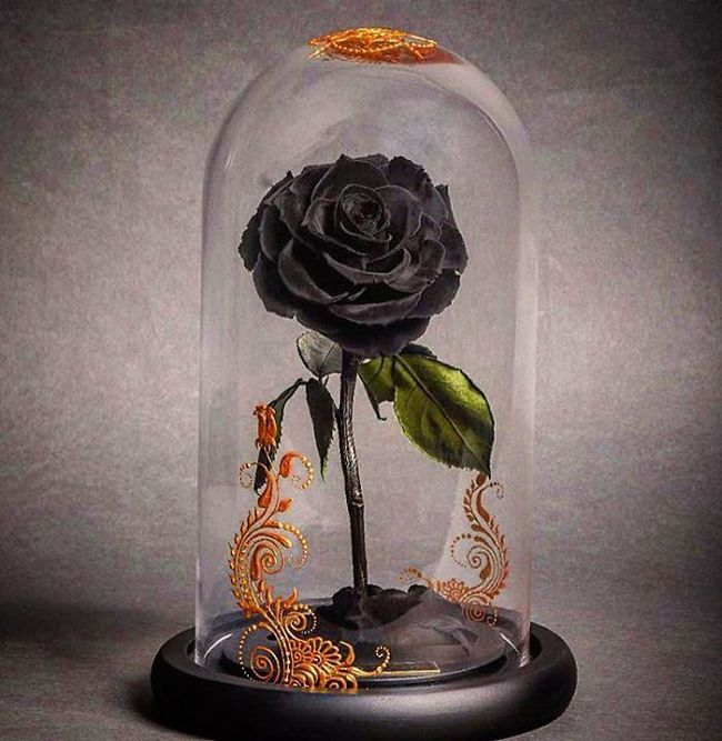 Chiêm ngưỡng những bông hồng vĩnh cửu đặt trong lồng kính y như truyện cổ tích - Ảnh 13.