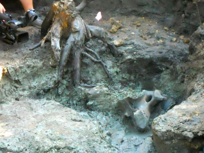 Thấy hòn đá kỳ lạ trong vườn, cả gia đình đào lên mới tá hỏa phát hiện ra thứ ẩn giấu bên dưới - Ảnh 3.