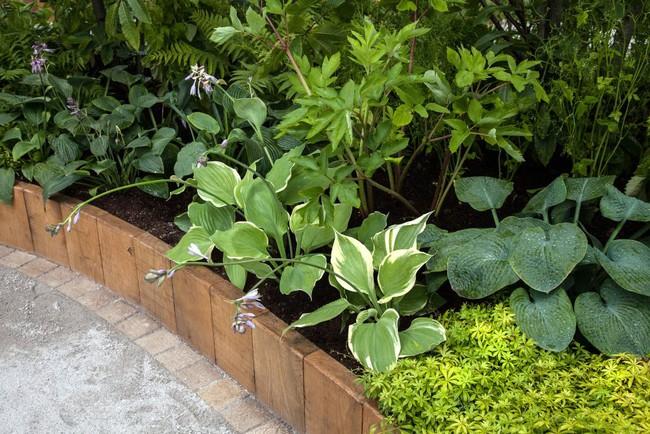 10 cách để hô biến sân vườn nhỏ trước nhà trở nên lung linh - Ảnh 5.