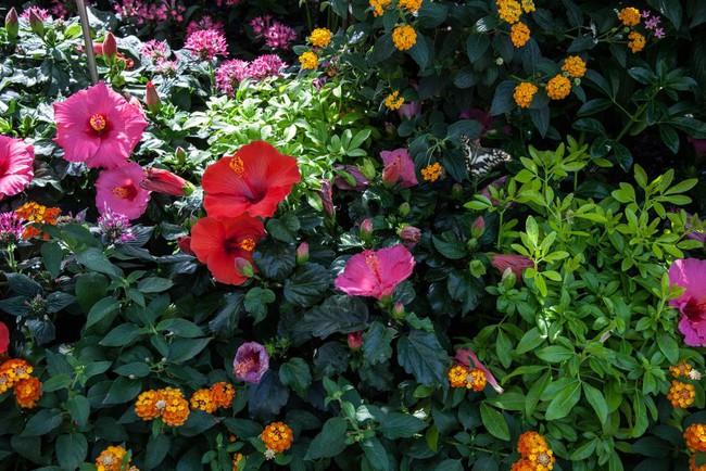 10 cách để hô biến sân vườn nhỏ trước nhà trở nên lung linh - Ảnh 7.