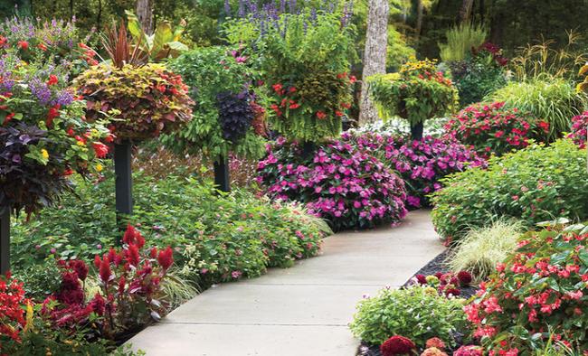 4 ý tưởng trang trí sân vườn bằng các loài hoa cho mùa hè rực rỡ - Ảnh 8.