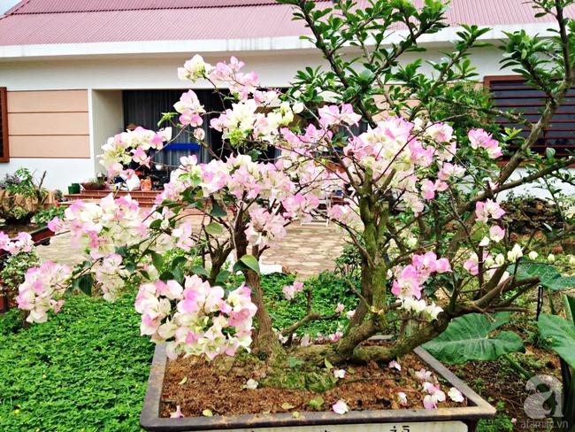 Bỏ việc quản lý và căn nhà ở nội thành Hà Nội, vợ chồng ra ngoại thành xây nhà vườn đẹp như cổ tích - Ảnh 18.