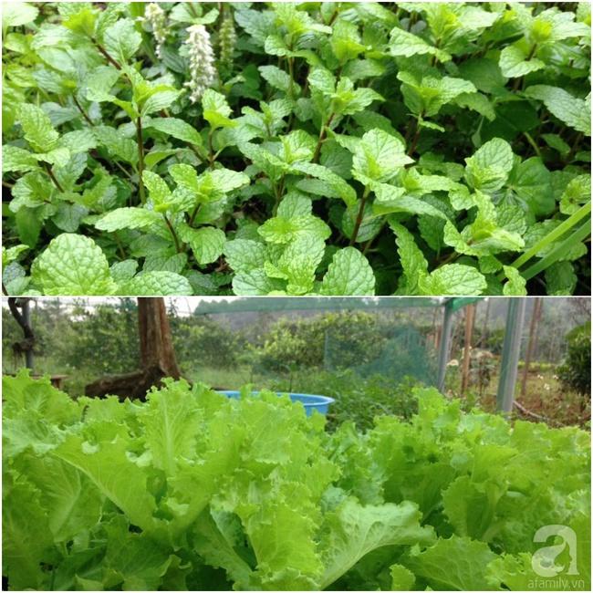 Bỏ việc quản lý và căn nhà ở nội thành Hà Nội, vợ chồng ra ngoại thành xây nhà vườn đẹp như cổ tích - Ảnh 25.