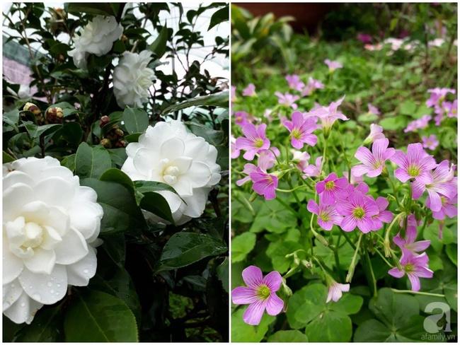 Bỏ việc quản lý và căn nhà ở nội thành Hà Nội, vợ chồng ra ngoại thành xây nhà vườn đẹp như cổ tích - Ảnh 28.