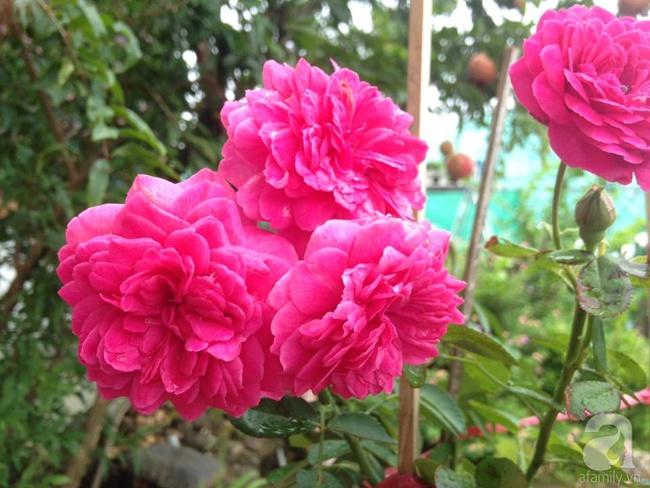 Bỏ việc quản lý và căn nhà ở nội thành Hà Nội, vợ chồng ra ngoại thành xây nhà vườn đẹp như cổ tích - Ảnh 29.