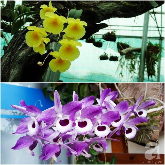 Bỏ việc quản lý và căn nhà ở nội thành Hà Nội, vợ chồng ra ngoại thành xây nhà vườn đẹp như cổ tích - Ảnh 30.