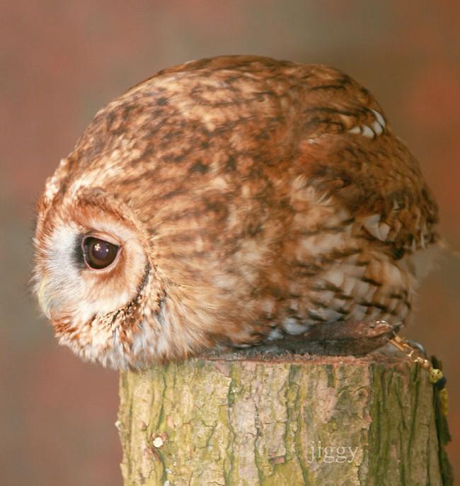 Những con vật tròn lăn lông lốc khiến ai cũng yêu từ cái nhìn đầu tiên - Ảnh 3.