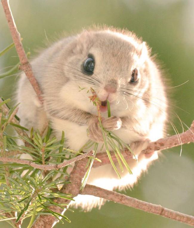 Những con vật tròn lăn lông lốc khiến ai cũng yêu từ cái nhìn đầu tiên - Ảnh 4.