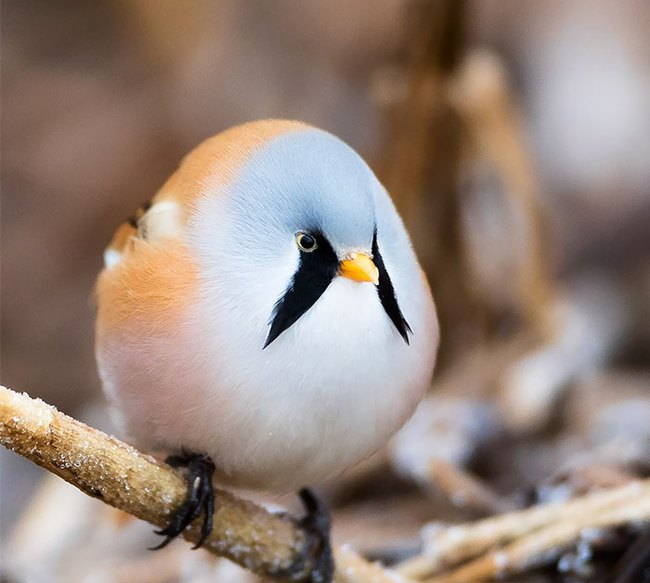 Những con vật tròn lăn lông lốc khiến ai cũng yêu từ cái nhìn đầu tiên - Ảnh 5.