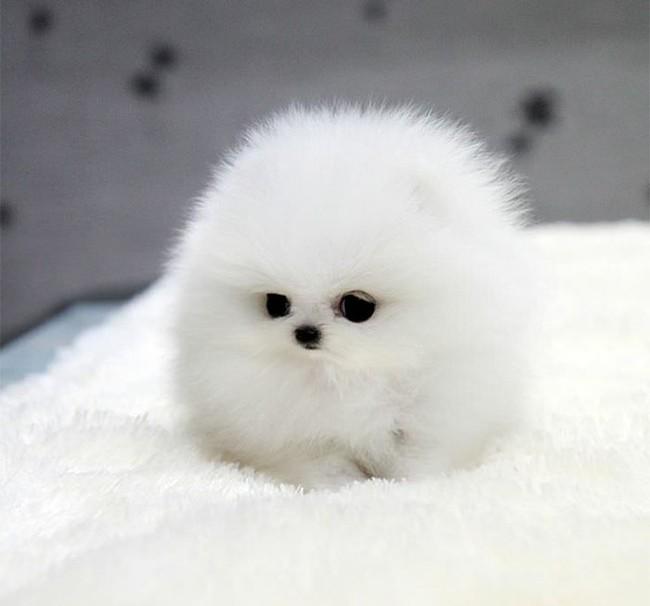 Những con vật tròn lăn lông lốc khiến ai cũng yêu từ cái nhìn đầu tiên - Ảnh 11.