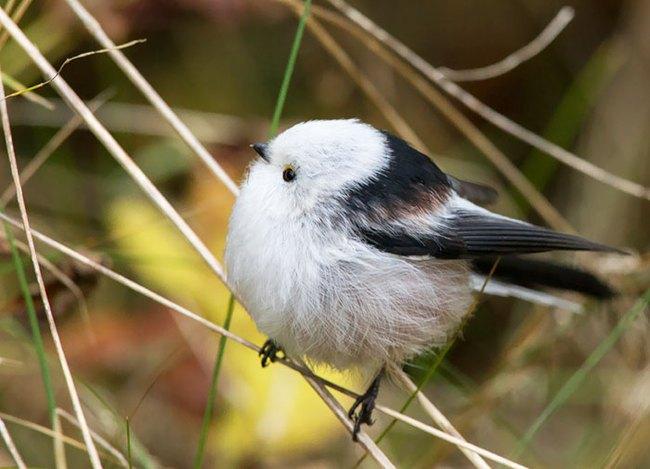 Những con vật tròn lăn lông lốc khiến ai cũng yêu từ cái nhìn đầu tiên - Ảnh 15.