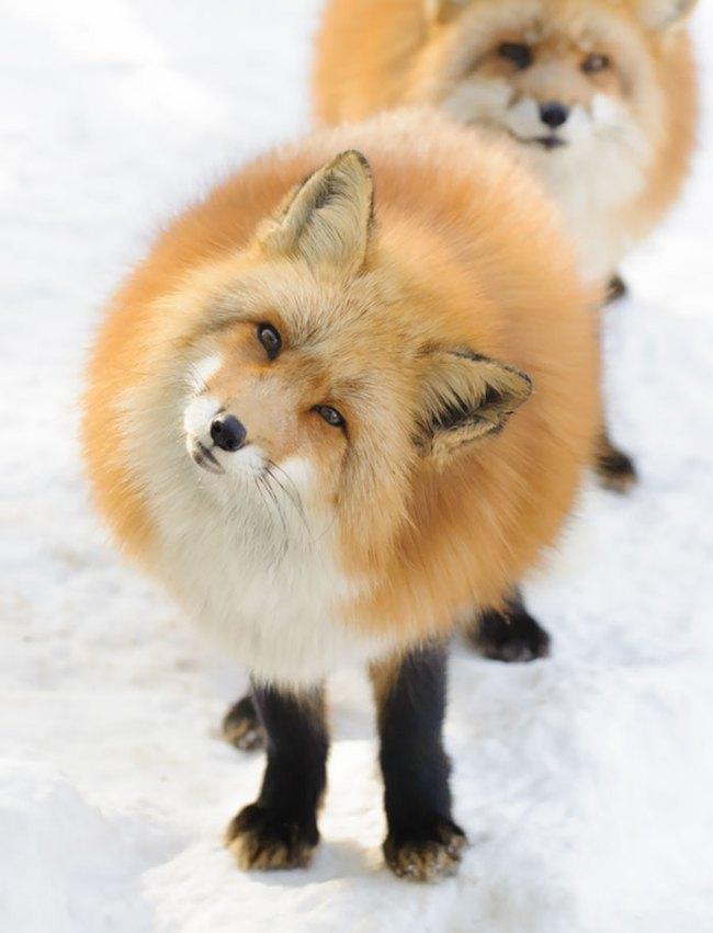 Những con vật tròn lăn lông lốc khiến ai cũng yêu từ cái nhìn đầu tiên - Ảnh 17.