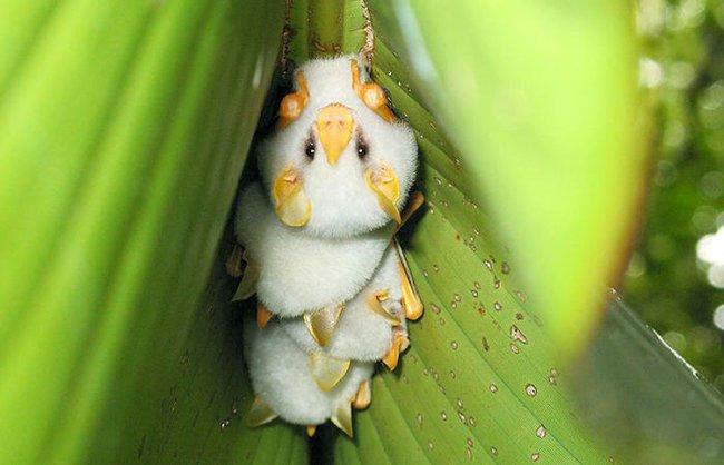 Những con vật tròn lăn lông lốc khiến ai cũng yêu từ cái nhìn đầu tiên - Ảnh 21.
